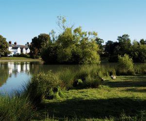 Photo of Hailsham Common Pond
